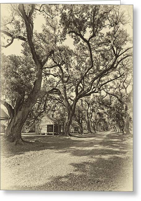 Slaves Photographs Greeting Cards - Southern Lane sepia Greeting Card by Steve Harrington