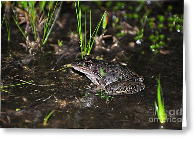 Al Powell Photography Usa Greeting Cards - Southern Leopard Frog Greeting Card by Al Powell Photography USA