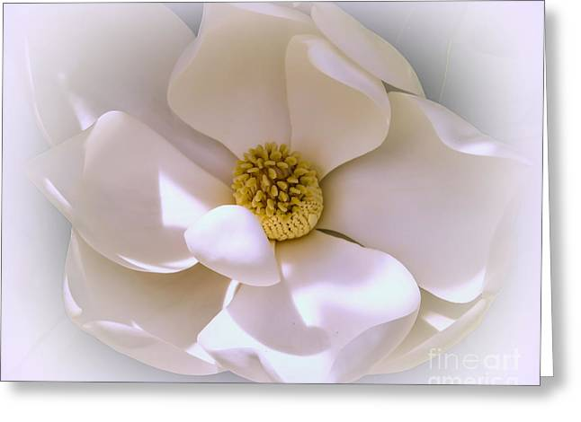 Bull Photographs Greeting Cards - Southern magnolia Greeting Card by Zina Stromberg