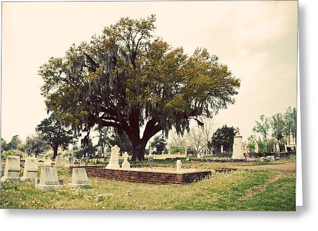 Civil War Site Digital Greeting Cards - Southern Moss Greeting Card by Max Mullins
