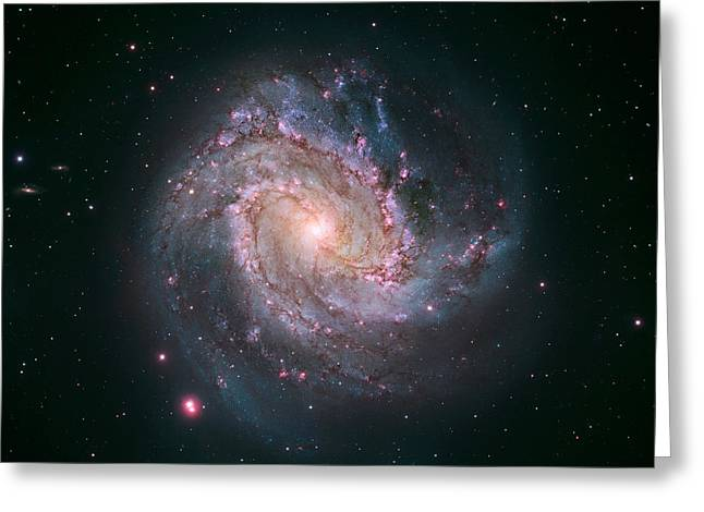 Constellations Greeting Cards - Southern Pinwheel Galaxy M83 Greeting Card by Science Source