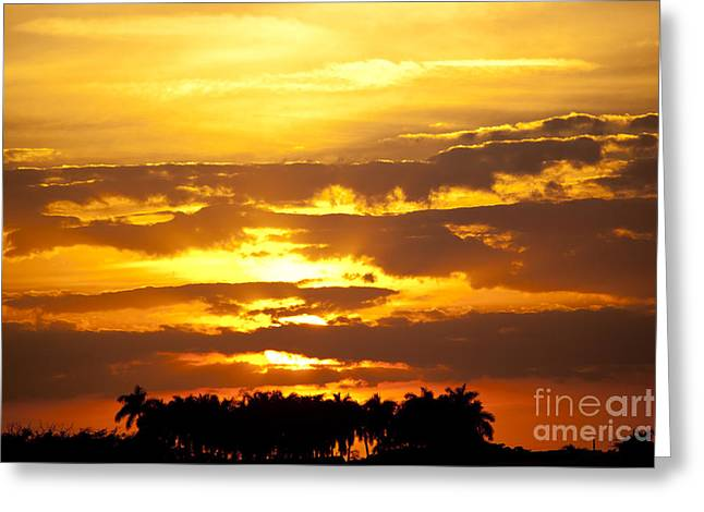 Michelle Greeting Cards - Southern Sunset Greeting Card by Michelle Wiarda