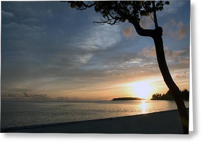 Macro Photography Pyrography Greeting Cards - Southern sunset Greeting Card by Naushad  Waheed