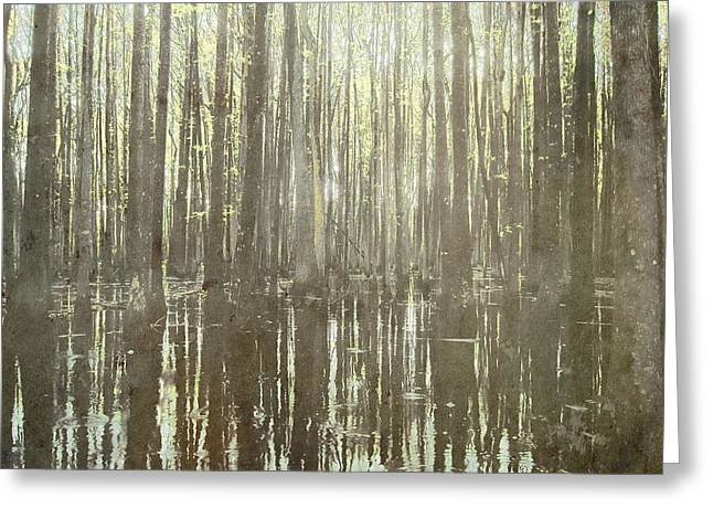 Southern Swamp Greeting Card by Brett Pfister