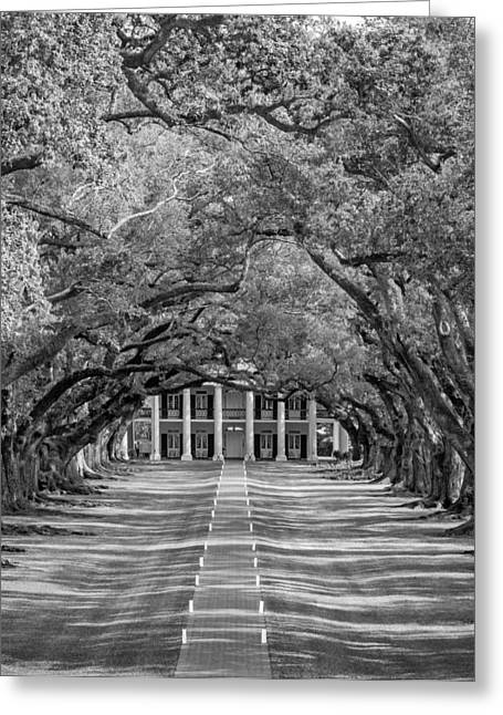 Slaves Greeting Cards - Southern Time Travel bw Greeting Card by Steve Harrington
