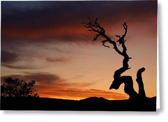 Path Greeting Cards - Southwest Tree Sunset Greeting Card by Michael J Bauer