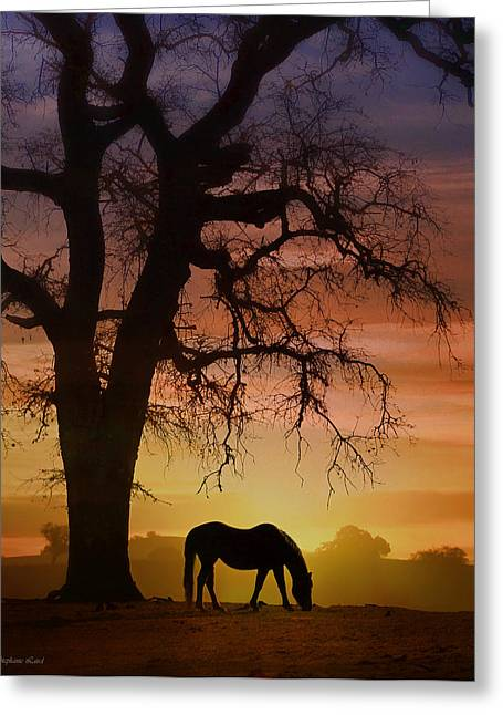 Wild Horses Greeting Cards - Southwestern Color Greeting Card by Stephanie Laird