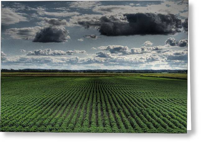 Farmers Field Greeting Cards - Soy Beans Greeting Card by Jane Linders