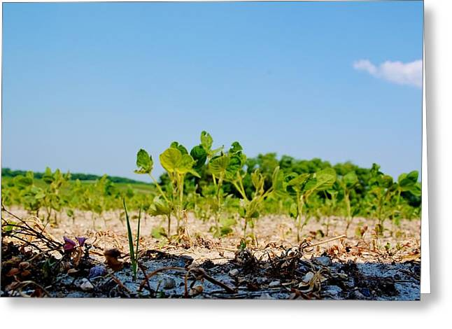 Green Beans Mixed Media Greeting Cards - Soybean Crop Greeting Card by Todd and candice Dailey