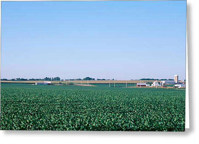 Ogling Greeting Cards - Soybean Field Ogle Co Il Usa Greeting Card by Panoramic Images