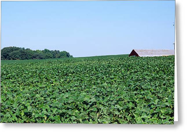 Kent Photography Greeting Cards - Soybean Field With A Barn Greeting Card by Panoramic Images