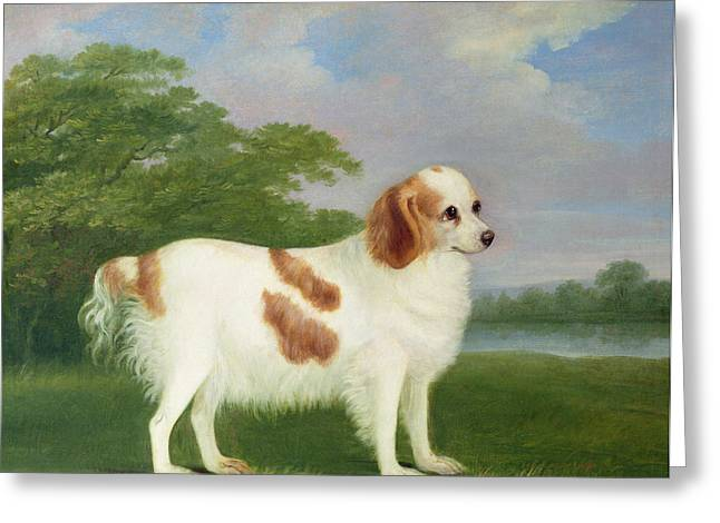 Spaniel in a Landscape Greeting Card by John Nott Sartorius