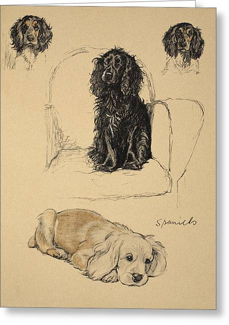 Dog Drawings Greeting Cards - Spaniels, 1930, Illustrations Greeting Card by Cecil Charles Windsor Aldin