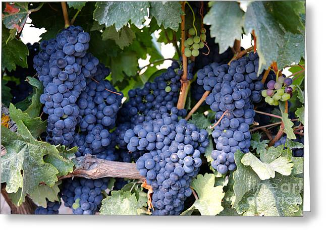 Grape Vineyards Greeting Cards - Spanish Grapes Greeting Card by Carol Groenen