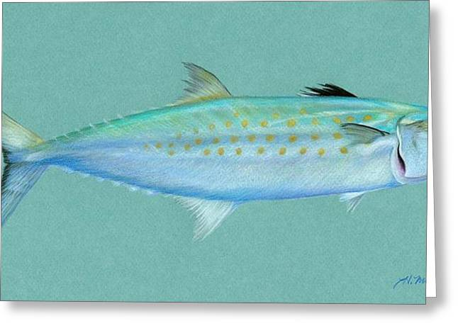 Fishing Rods Drawings Greeting Cards - Spanish Mackerel Greeting Card by Heather Mitchell