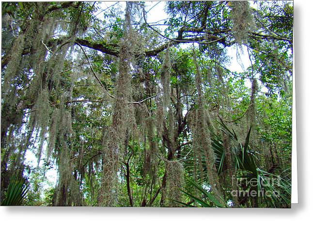"""""""jungle Vines"""" Greeting Cards - Spanish Moss 3 Greeting Card by Nancy L Marshall"""