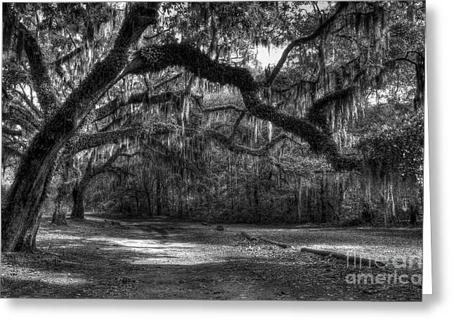 St. Helena Island Greeting Cards - Spanish Moss bw Greeting Card by Mel Steinhauer