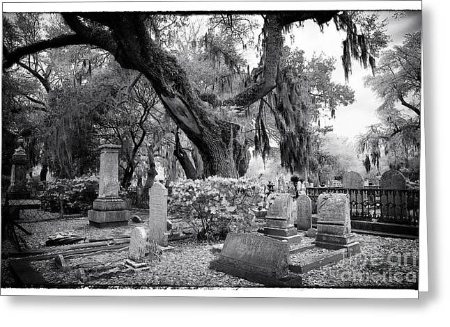 Historic Cemetery Greeting Cards - Spanish Moss in the Cemetery Greeting Card by John Rizzuto