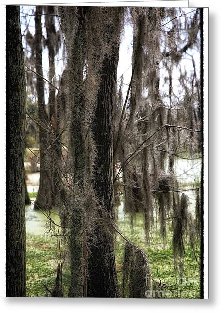 The Swamp Greeting Cards - Spanish Moss in the Swamp Greeting Card by John Rizzuto