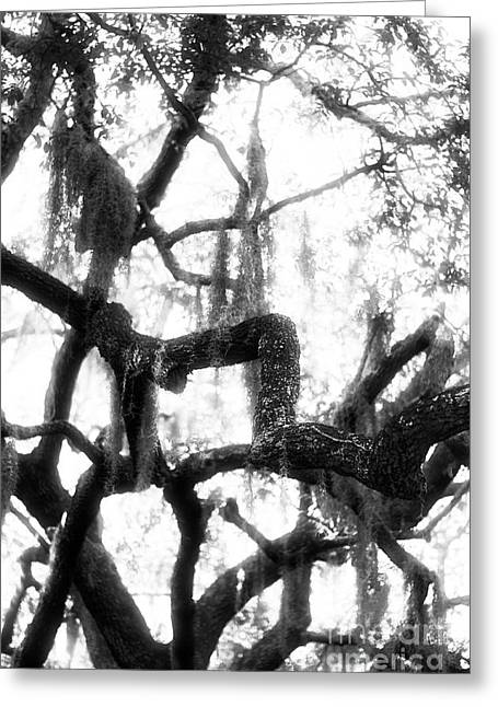 Savannah Infrared Photography Greeting Cards - Spanish Moss Greeting Card by John Rizzuto