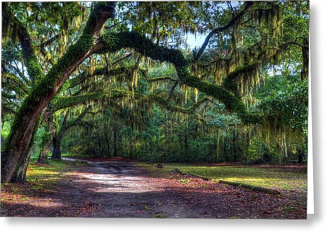St Helena Island Greeting Cards - Spanish Moss Greeting Card by Mel Steinhauer