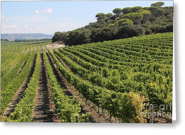 Spanish Vineyard Greeting Card by Carol Groenen