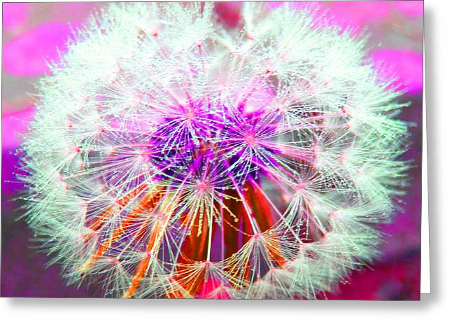 Sparkle Greeting Card by Barbara McDevitt
