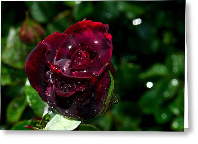 Wet Rose Greeting Cards - Sparkling Red Rose Greeting Card by Camille Lopez