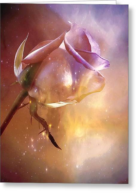 Sparkling Rose Greeting Card by Anne Macdonald