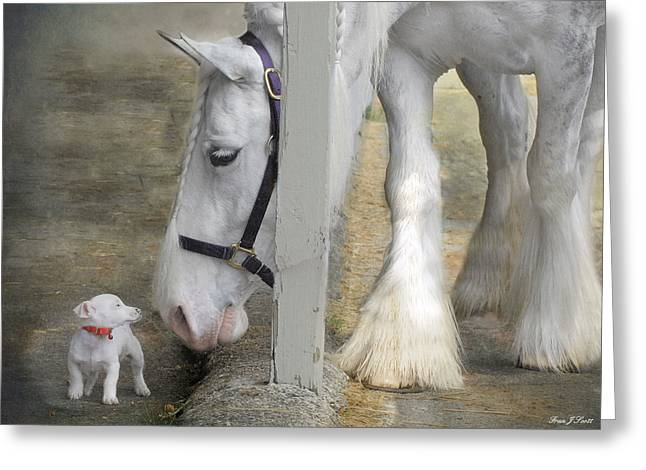 Horse Photographs Greeting Cards - Sparky and Sterling Silvia Greeting Card by Fran J Scott