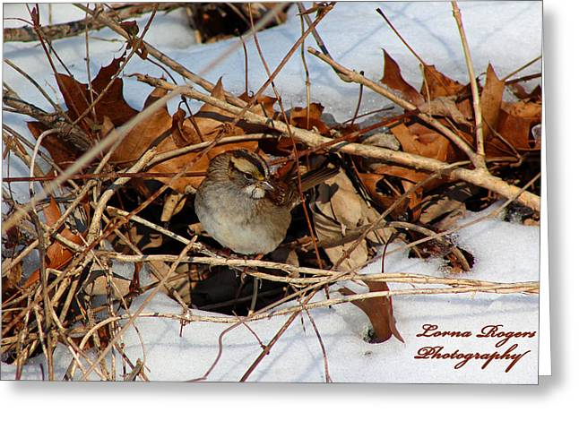 Get Well Card Framed Prints Greeting Cards - Sparrow Hideout Greeting Card by Lorna Rogers Photography
