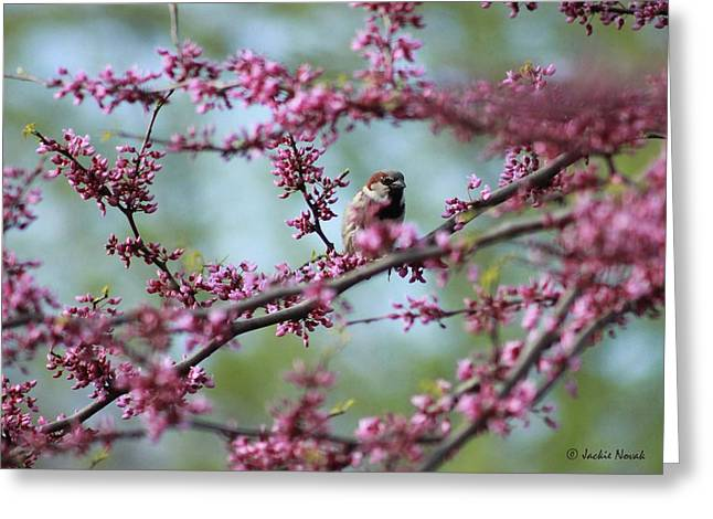 Sparrow In A Red Bud Greeting Card by Jackie Novak