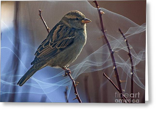 Cut-outs Greeting Cards - Sparrow In A Weave Greeting Card by Janice Rae Pariza