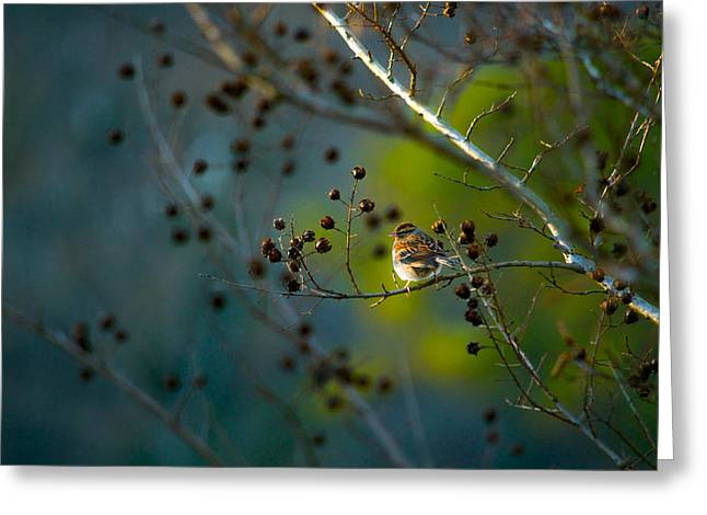 Feeling Young Greeting Cards - Sparrow in the Warm Light Greeting Card by Shelby  Young