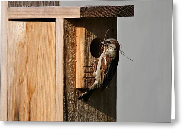 Sparrow Greeting Cards - Sparrow Nest And Birdhouse Greeting Card by Dan Sproul