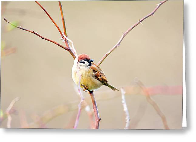 Full-length Portrait Mixed Media Greeting Cards - Sparrow on branch  Greeting Card by Toppart Sweden