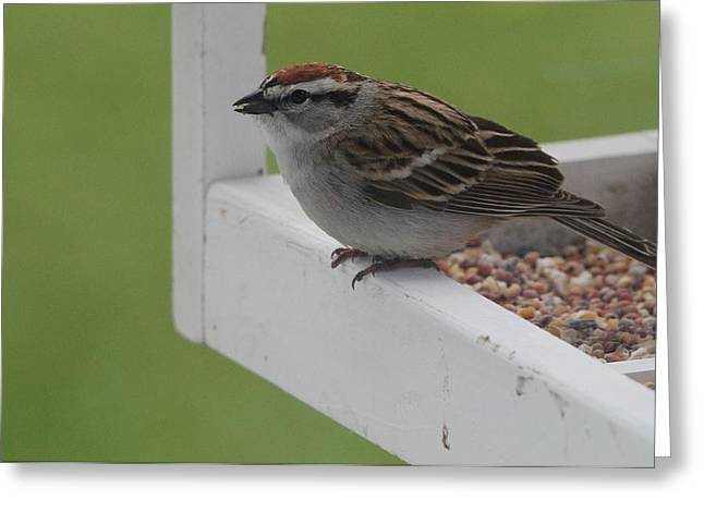 Sparrow Greeting Cards - Sparrow On Feeder Greeting Card by Dan Sproul