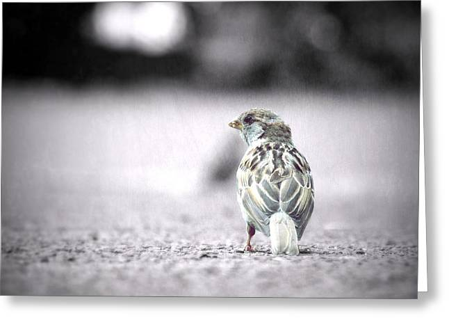 Texturen Greeting Cards - Sparrow Greeting Card by Pimpinella Art