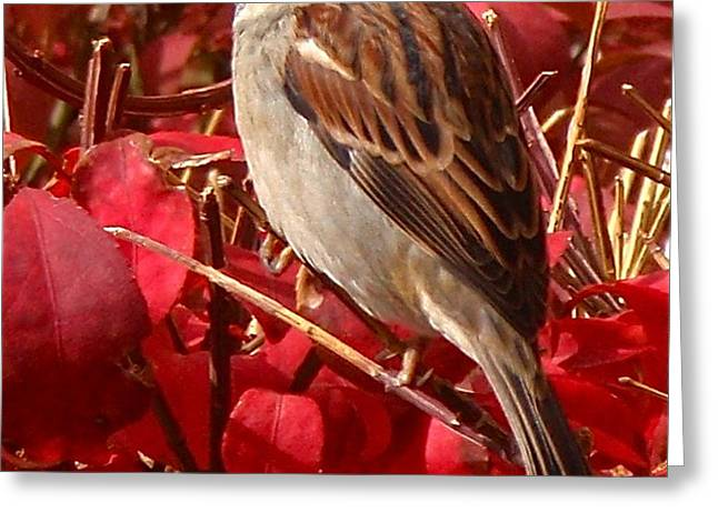 Sparrow Greeting Card by Rona Black