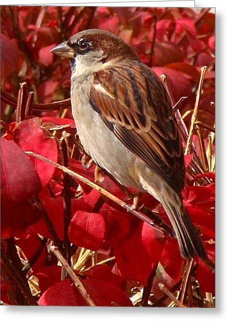 Sparrow Greeting Cards - Sparrow Greeting Card by Rona Black