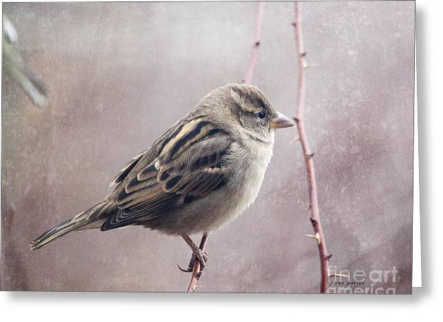 Full-length Portrait Greeting Cards - Sparrow Series 10 Greeting Card by Janice Rae Pariza