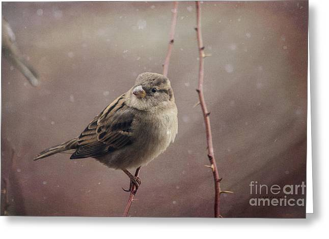 Full-length Portrait Greeting Cards - Sparrow Series 11 Greeting Card by Janice Rae Pariza