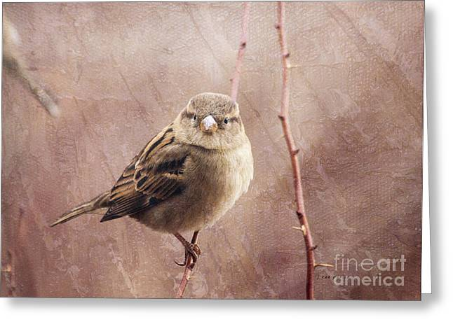 Full-length Portrait Greeting Cards - Sparrow Series 12 Greeting Card by Janice Rae Pariza