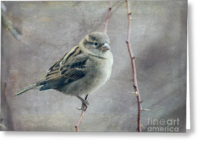 Full-length Portrait Greeting Cards - Sparrow Series 13 Greeting Card by Janice Rae Pariza