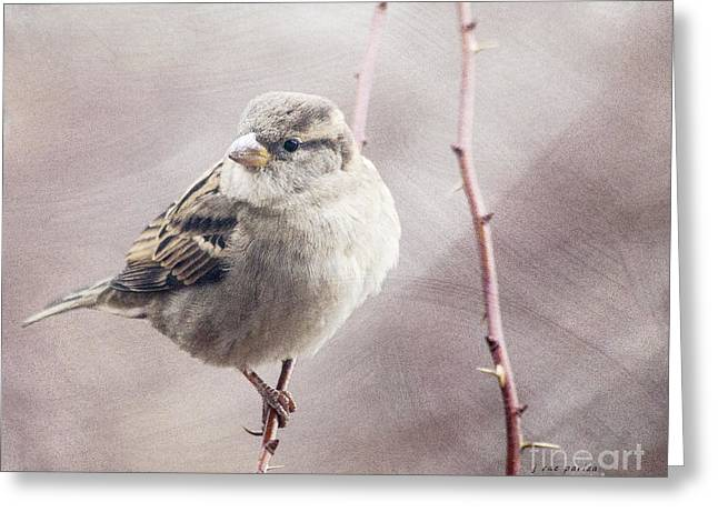Full-length Portrait Greeting Cards - Sparrow Series 7 Greeting Card by Janice Rae Pariza