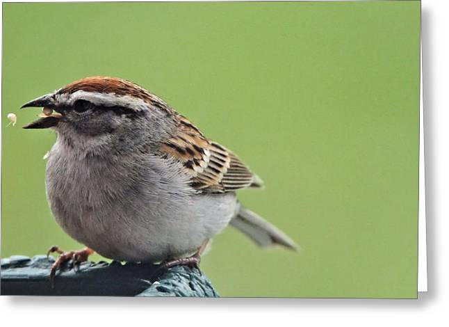 Sparrow Snack Greeting Card by Dan Sproul