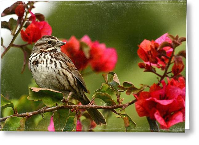 Bird On Tree Greeting Cards - Sparrow Song 8 Greeting Card by Fraida Gutovich