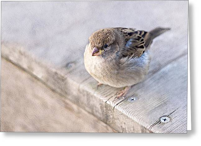 Overweight Greeting Cards - Sparrow - Takeoff Problems Greeting Card by Alexander Senin