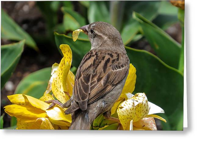 Sparrow Greeting Card by Zina Stromberg
