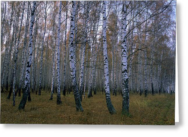 Grooves Greeting Cards - Spasskoye Lutovinovo Greeting Card by Anonymous